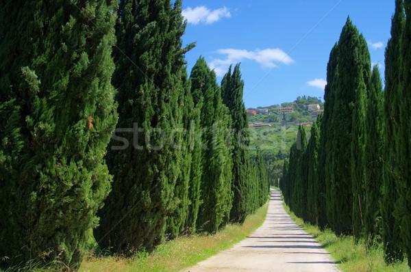 Cyprys 25 krajobraz drzew zielone utwór Zdjęcia stock © LianeM
