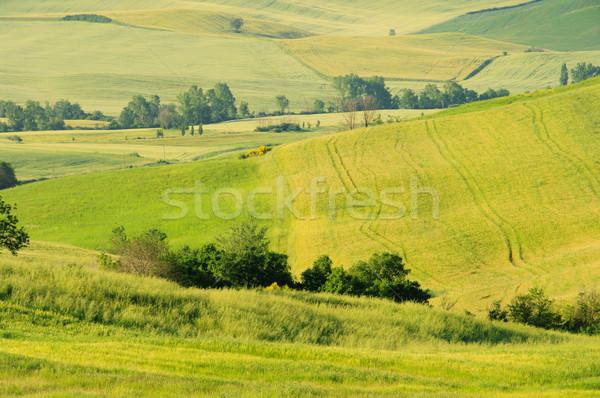 Toscana colline 26 albero erba natura Foto d'archivio © LianeM