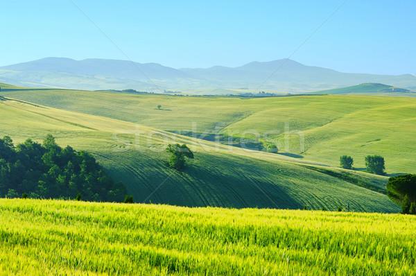 Tuscany hills 43 Stock photo © LianeM