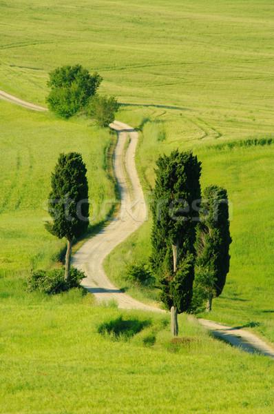 Tuscany hills 24 Stock photo © LianeM