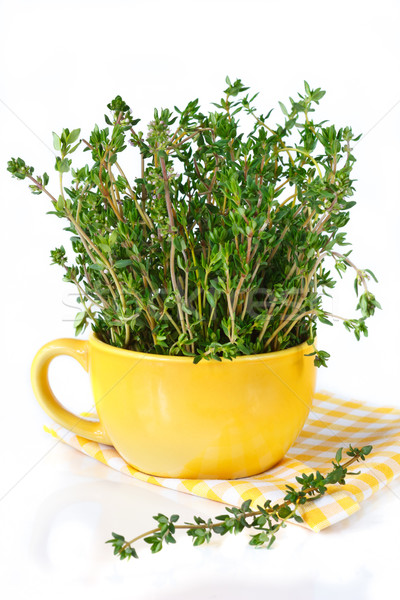 Bunch of thyme. Stock photo © lidante