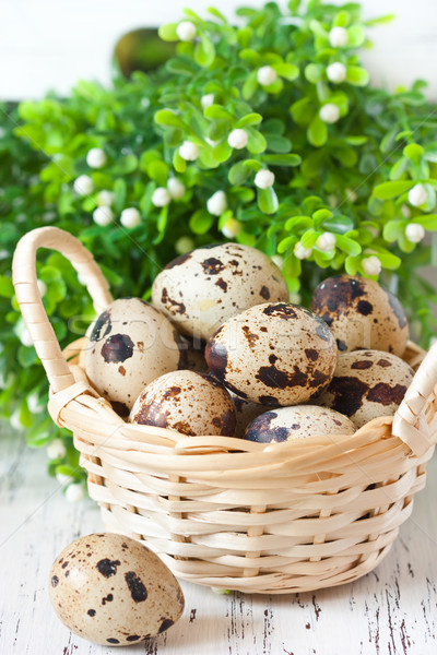 Quail egg. Stock photo © lidante