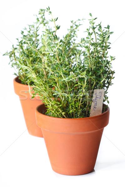 Fresh thyme. Stock photo © lidante