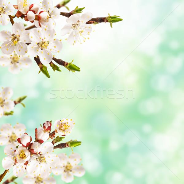 Primavera belo florescimento árvore páscoa Foto stock © lidante