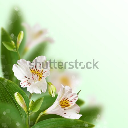 Floral background. Stock photo © lidante