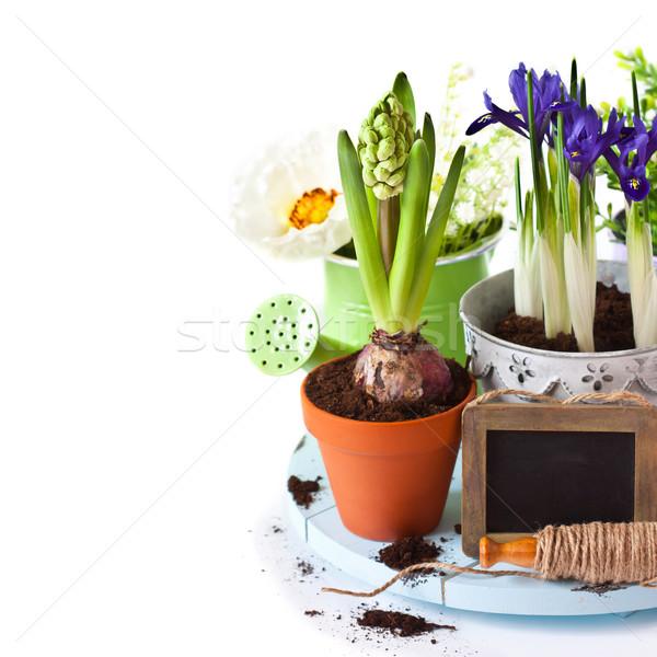 Spring time.  Stock photo © lidante