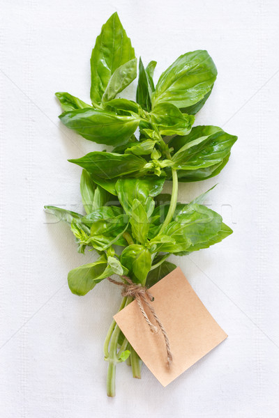 バジル 新鮮な 緑 葉 白 布 ストックフォト © lidante