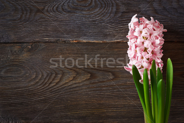Hyacint mooie voorjaar houten exemplaar ruimte tekst Stockfoto © lidante