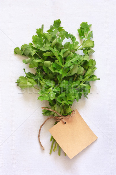 Coentro fresco verde folhas branco pano Foto stock © lidante