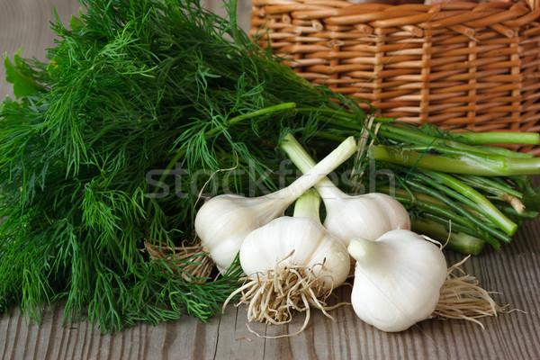 Garlic and dill. Stock photo © lidante