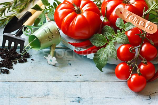 Ogrodnictwo świeże dojrzały pomidory starych Zdjęcia stock © lidante