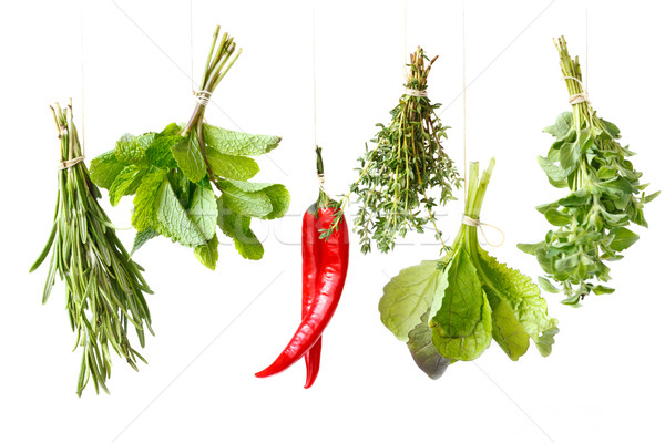 Herbs. Stock photo © lidante