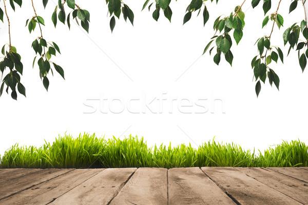 Zöld levelek fából készült deszkák fény háttér asztal Stock fotó © LightFieldStudios