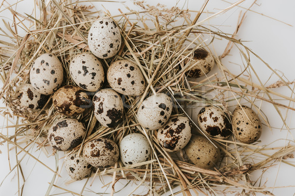 quail eggs laying on straw over white background Stock photo © LightFieldStudios