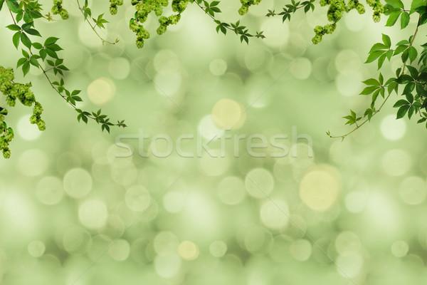Verde follaje fotograma completo textura fondo Foto stock © LightFieldStudios