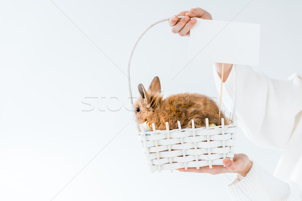 Shot ragazza basket cute peloso Foto d'archivio © LightFieldStudios