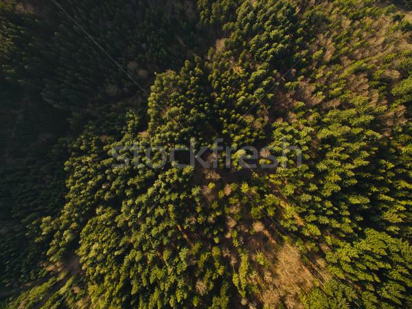 Belo verde mata árvores Alemanha Foto stock © LightFieldStudios