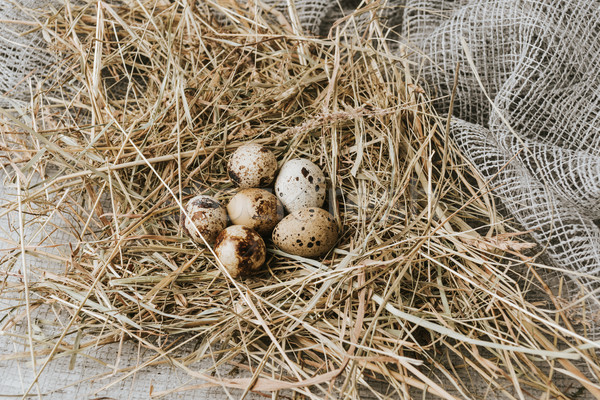 quail eggs laying on straw over sackcloth  Stock photo © LightFieldStudios