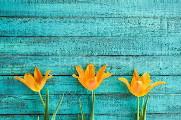 Topo ver amarelo tulipas turquesa Foto stock © LightFieldStudios