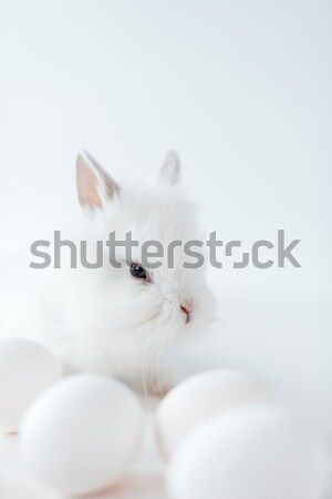 close-up view of adorable white furry rabbit and chicken eggs on white Stock photo © LightFieldStudios