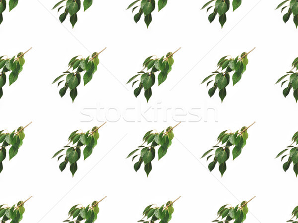 branches with green leaves Stock photo © LightFieldStudios