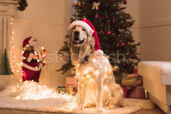 dog in santa hat  Stock photo © LightFieldStudios