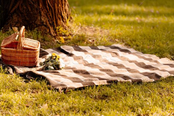 Piknik battaniye sepet boş çimenli çim ağaç Stok fotoğraf © LightFieldStudios