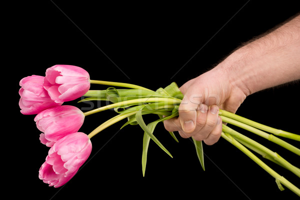 Close-up partial view of man holding pink tulips on black, international womens day concept Stock photo © LightFieldStudios