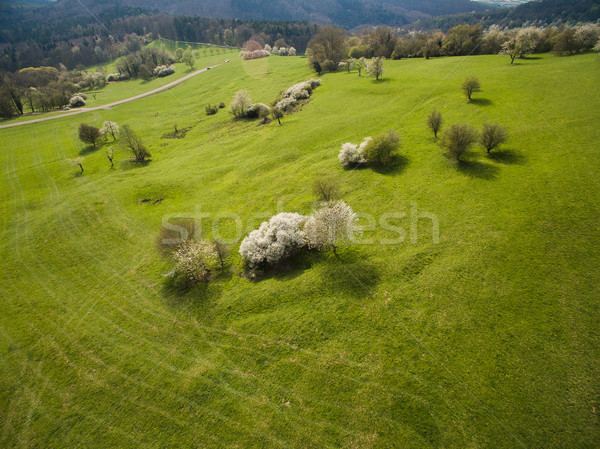 Aerial view of green hills with trees, Germany Stock photo © LightFieldStudios