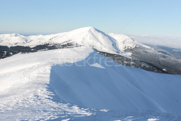 Stock photo: scenic view of peaks of mountains and forest covered with snow, Carpathian Mountains, Ukraine