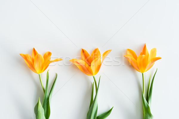 Felső kilátás citromsárga tulipánok csetepaté izolált Stock fotó © LightFieldStudios