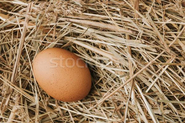unprocessed brown egg laying on straw   Stock photo © LightFieldStudios