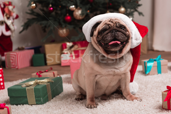 Stock photo: pug in santa hat