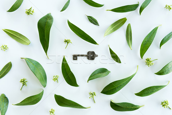 Top view of beautiful fresh green leaves and old key isolated on white Stock photo © LightFieldStudios