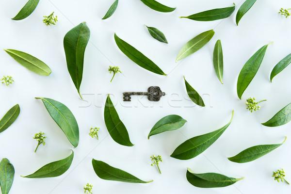 Haut vue belle fraîches feuilles vertes vieux Photo stock © LightFieldStudios