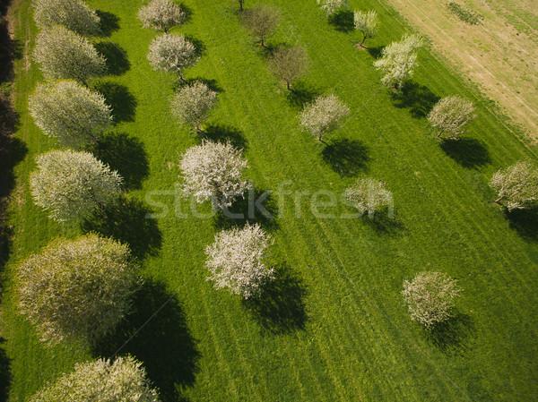 Verde paisaje frutas árboles jardín Foto stock © LightFieldStudios