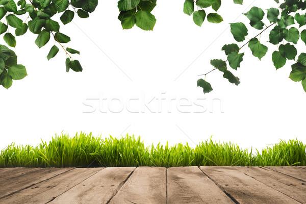 Zöld levelek fából készült deszkák izolált fehér fény Stock fotó © LightFieldStudios