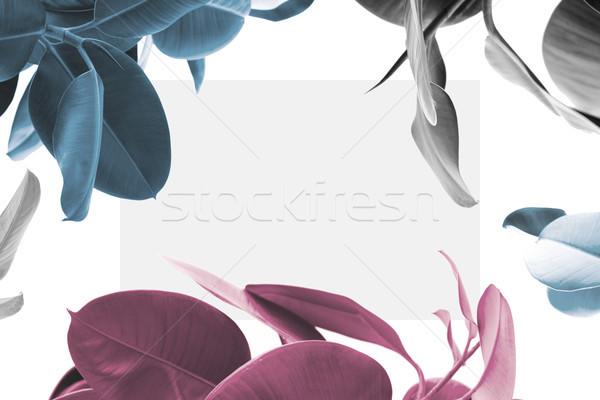 ficus plants with blank card Stock photo © LightFieldStudios