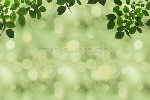 Grünen Laub bokeh Vollbild Niederlassungen Textur Stock foto © LightFieldStudios