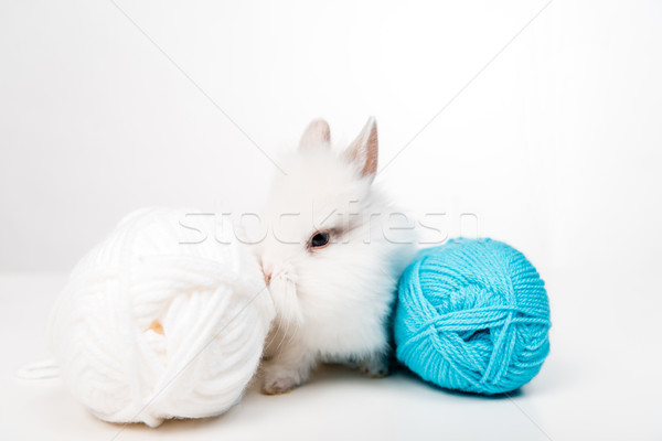 close-up view of adorable furry rabbit and balls of yarn isolated on white  Stock photo © LightFieldStudios