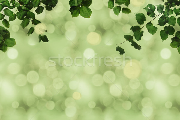 green foliage and bokeh Stock photo © LightFieldStudios