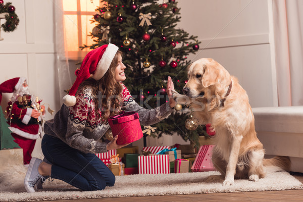 young woman and dog at christmastime Stock photo © LightFieldStudios