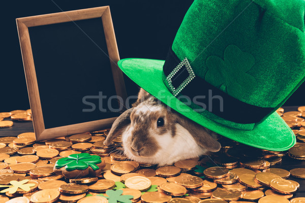 Stock photo: domestic rabbit sitting on golden coins under green hat, st patricks day concept