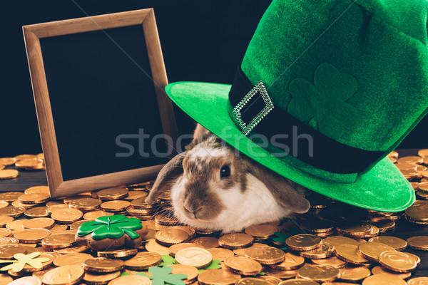Krajowy królik posiedzenia złoty monet zielone Zdjęcia stock © LightFieldStudios