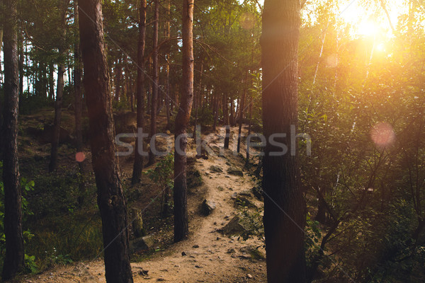 Footpath in forest at sunset Stock photo © LightFieldStudios