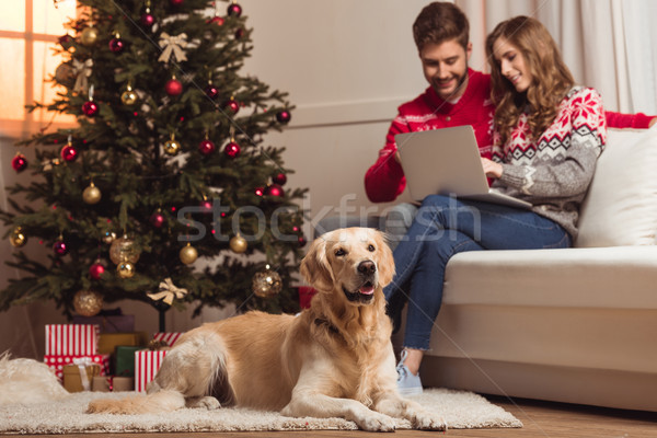 dog and couple using laptop Stock photo © LightFieldStudios