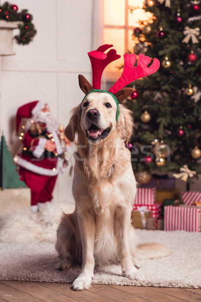 Golden retriever hond gewei grappig vergadering tapijt Stockfoto © LightFieldStudios