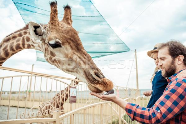 Foto stock: Família · girafa · jardim · zoológico · vista · lateral · pai