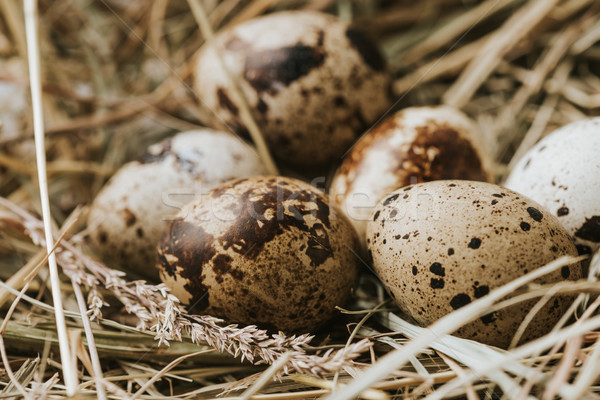 quail eggs laying on straw close to each other Stock photo © LightFieldStudios