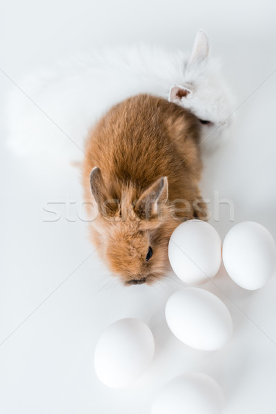 close-up view of adorable furry rabbits and chicken eggs on white Stock photo © LightFieldStudios